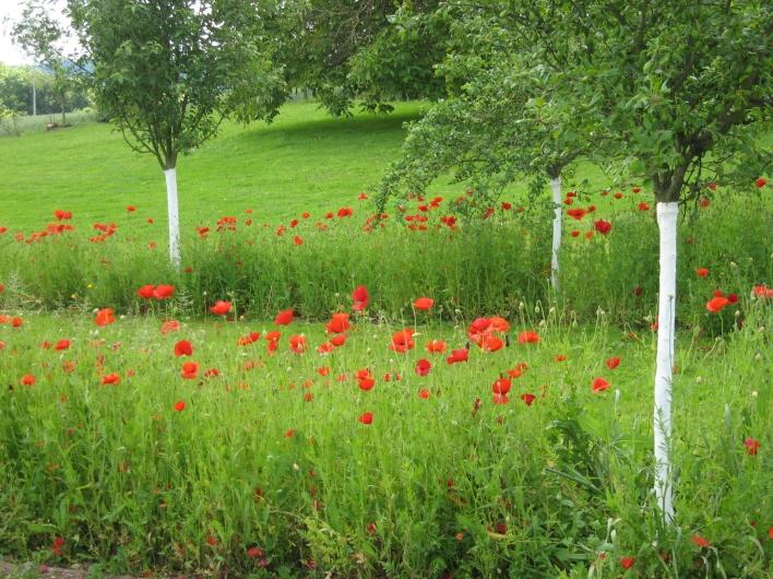Le jardin de marie - Les jardins de neuilly ...